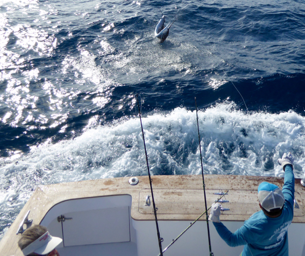 Obsession fishing outer banks north carolina sportfishing for Fishing charters outer banks